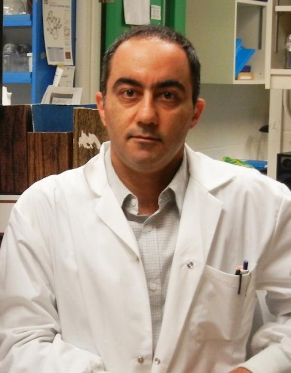 Abdi Ghaffari